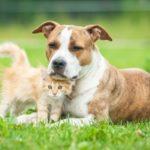 Dürfen Behörden Haustiere pfänden? Der Fall um Mops Edda wirft Fragen auf.