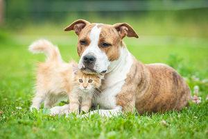Haustiere dürfen bei einer Zwangsvollstreckung in bewegliches Vermögen gewöhnlich nicht gepfändet werden.