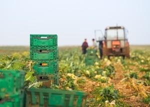 Macht der Verpächter von seinem Pfandrecht Gebrauch, dürfen meist Arbeitsmaschinen und die Ernte gepfändet werden.